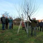 Wertvolle Tipps und Kniffe:</br>Obstbaumschnitt des NABU