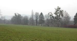 Hofwiesen 10.03.16