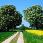 WIR sagt Nein zur Trassenplanung</br>Erhalt und Schutz der Bückeburger Niederung