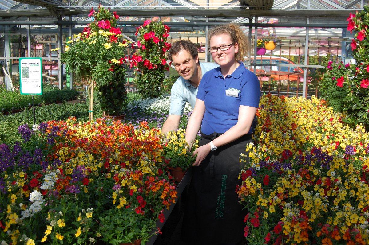 heute beginn des sommerblumen-verkaufs50.000 pflanzen aus eigener