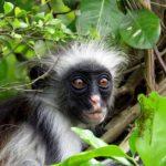 Bilder-Vortrag Sansibar