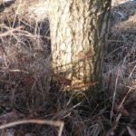 Baumfrevel im Landschaftsschutzgebiet