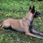 Polizei setzt Spezialhund am Brandort ein