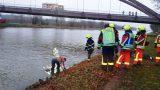 Totes Wildschwein aus Mittellandkanal geborgen