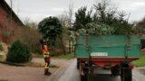 Feuerwehren sammeln Tannenbäume ein