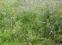 """""""Wir wollen es blühend haben"""" </br>Landkreis hat Bedenken gegen Anlegen von Blühwiesen"""